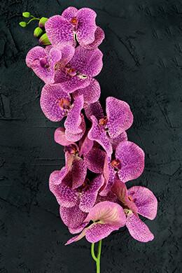 Orchid Flower Purple 60in