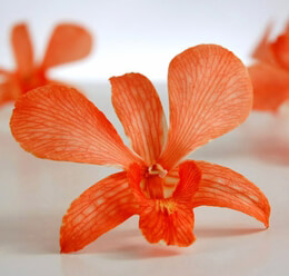 Orchid Flowers Orange Preserved | 30 flowers