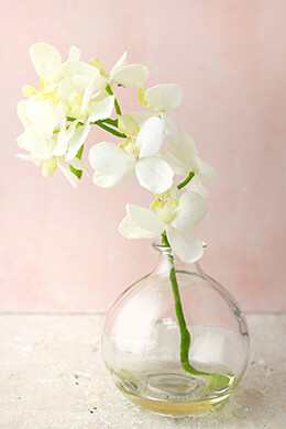 Cream White Phalaenopsis Orchid in Glass Vase 10in