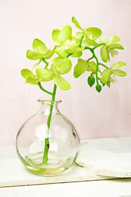 Orchid in Vase 12in Green Phalaenopsis