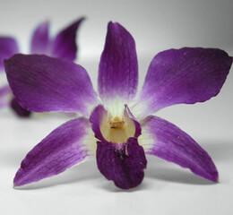 Orchids Flowers, Petals, Leis