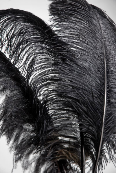 Black ostrich feathers - photo#13