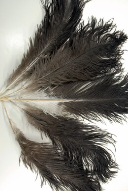 Ostrich Feathers 17in | 100 feathers