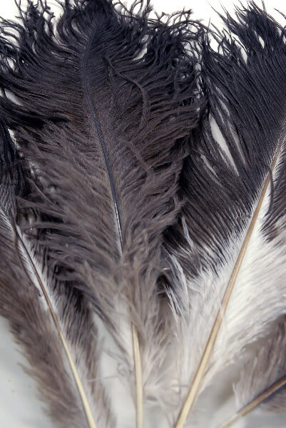 100 Natural 17in Ostrich Feathers 1/2 LB