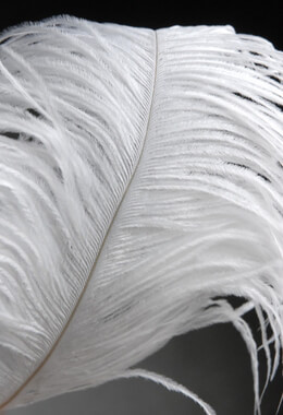 "Ostrich Feathers White Wing Tips 10-14"" (1/2lb 