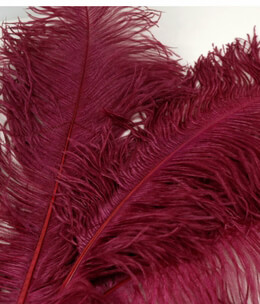 "Ostrich Plumes Highest Quality18""-22"" Burgundy (1/2 lb)"