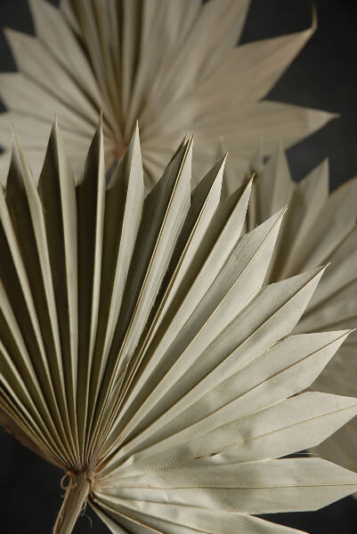 Palm Leaf Fans Dried Pack of 5