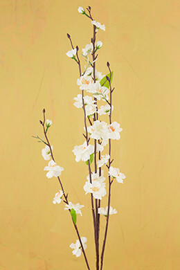 White Peach Blossom Branches