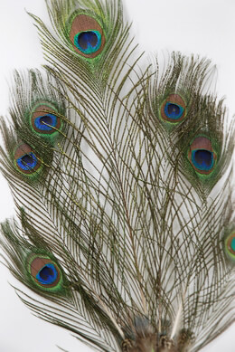"Peacock Feathers 7 Peacock Feathers Stem 36"" tall"