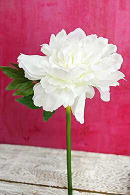 White Silk Peonies