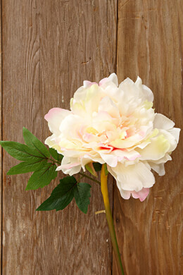 Peony Pink Stem 14in
