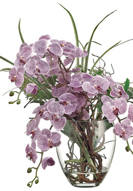 Purple Phalaenopsis Orchid Arrangement in Glass Vase, Ships FREE
