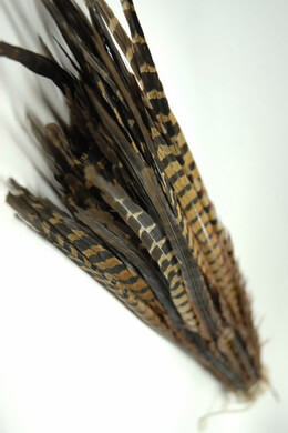 Pheasant Feathers Ringneck 26in (Pack of 100)