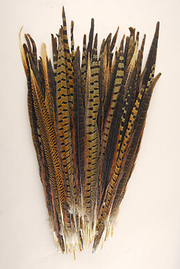 Pheasant Tail Feather Assortment 14-18in (Pack of 100)