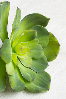 Natural Touch Echeveria Green Floral Pick , Faux Succulents