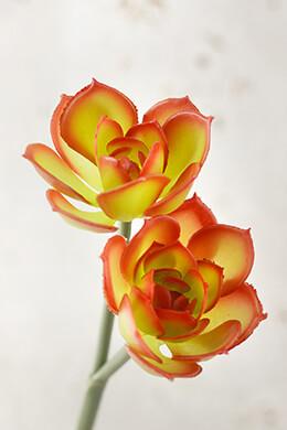 "Green Orange & Red Echeveria Floral Pick 10.5"""