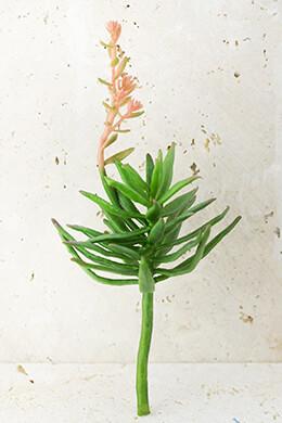 """Flowering Aeonium Succulent Floral Pick 10"""""""