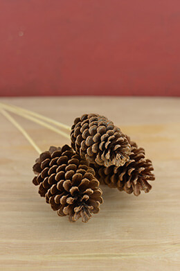 3 Tall Pine Cone Picks 21""