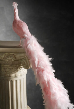 Pink Peacocks 28""