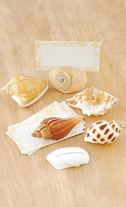 Place Card Holder Shells (Set of 6)