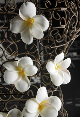 """Plumerias 2.5"""" Flowers (9 flower blooms/box)"""