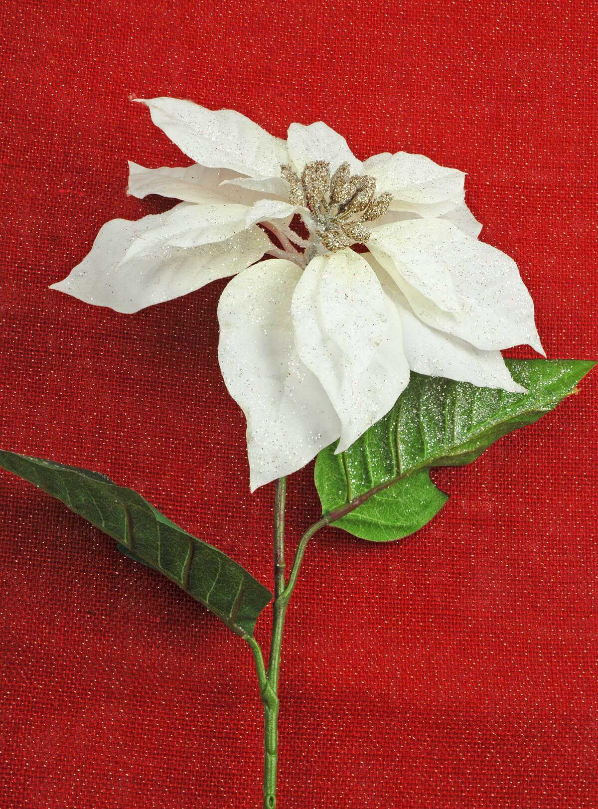 White Poinsettia Flower With Glitter