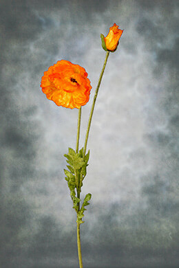 Tall Silk Orange Poppy Flowers 42in
