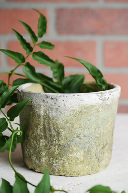 Rustic Clay  Pot - White Moss
