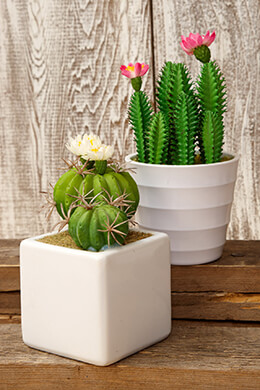 Potted Cactus Pair Pink 6/7.5in (Set of 6)