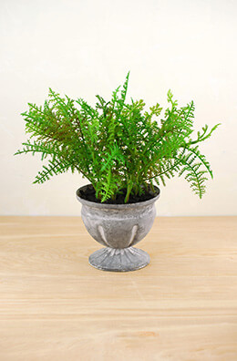Artificial Potted Fern Plant in Ceramic Pot 11in