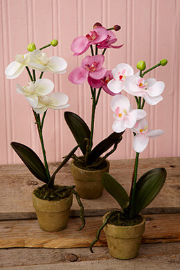 Potted Orchids Cool 12in (Set of 3)