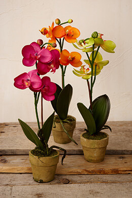 Potted Orchids Warm 12in (Set of 3)