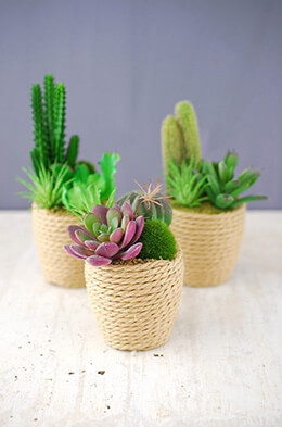 Potted Succulents (Set of 3)