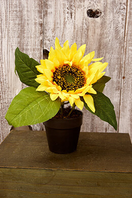 Potted Sunflower Yellow 7.5in