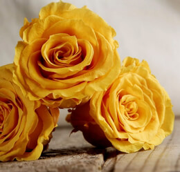 Preserved Akari Queen Mimosa Yellow Roses 2.5in (6 rose heads)