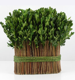 "Preserved Boxwood 11"" Arrangement"