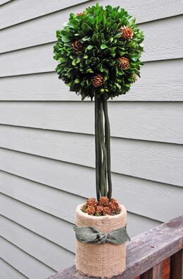 Preserved Boxwood Topiary 20in