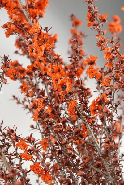 Flower Bundle Preserved 27in