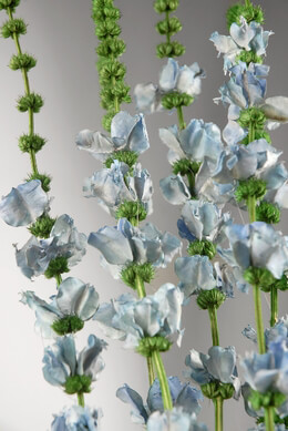 Preserved Flowers Blue Larkspur Flowers Dried (6 stems/ bunch)