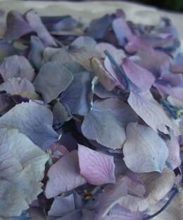 Preserved Hydrangea Petals in Lavender