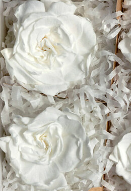 4 White Preserved Gardenias 3""