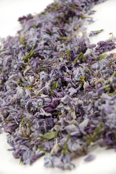 Preserved Lilac Flowers Purple Lilacs