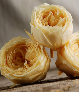 Preserved Natural Morning Yellow Roses (8 rose heads)