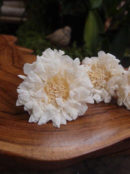 Preserved Natural Soft Pincushion Scabiosa Flowers (5 flowers)