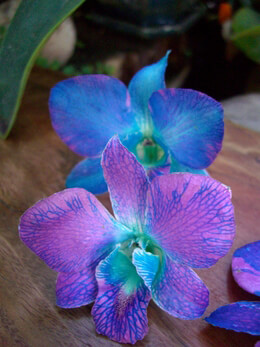 Preserved Orchid Flowers Blue Violet (30 flowers)