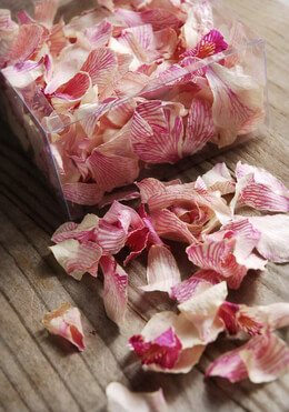 Preserved Orchid Petals Butterfly Pink