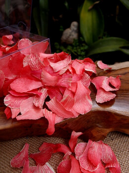 Orchid Petals Cherry Red Preserved