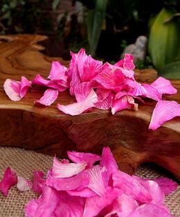 Preserved Orchid Petals Hot Magenta