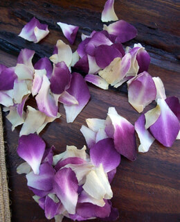 Orchid Petals Purple & White Preserved