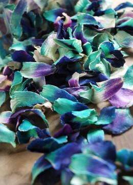 Orchid Petals Blue Preserved